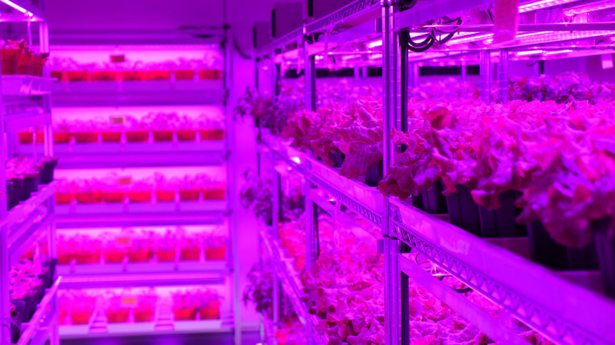 Singapore S Giant Vertical Farm Grows 80 Tons Of