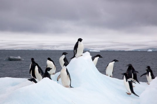 Antarctica Just Hit A Record High Temperature Of 63 5 U00b0f
