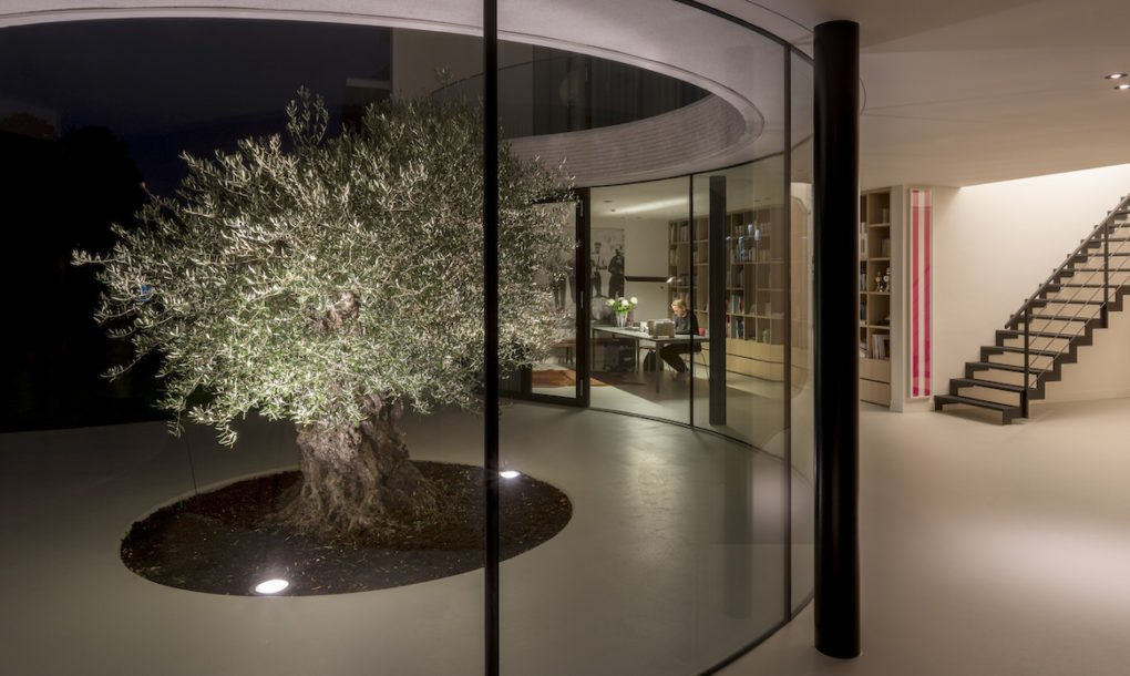 Solar Powered Rotterdam Home Wraps Around An Olive Tree