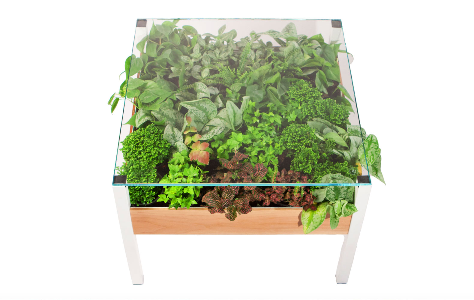 The Living Table is a verdant indoor garden hidden in your table