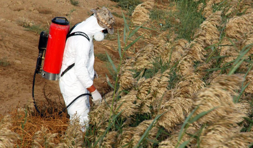 pesticides, health, world hunger, hunger, food, food security, united nations, environment, pollution, agriculture, un report says need for pesticides to combat hunger is a myth, need for pesticides is a myth,