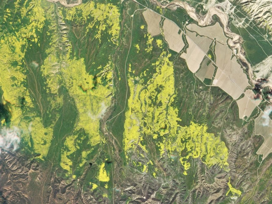 Planet, Planet Labs, KQED, California, super bloom, wildflower bloom, flower, flowers, wildflower, wildflowers, nature, environment, natural beauty, satellite, satellites, satellite image, satellite images, satellite imagery