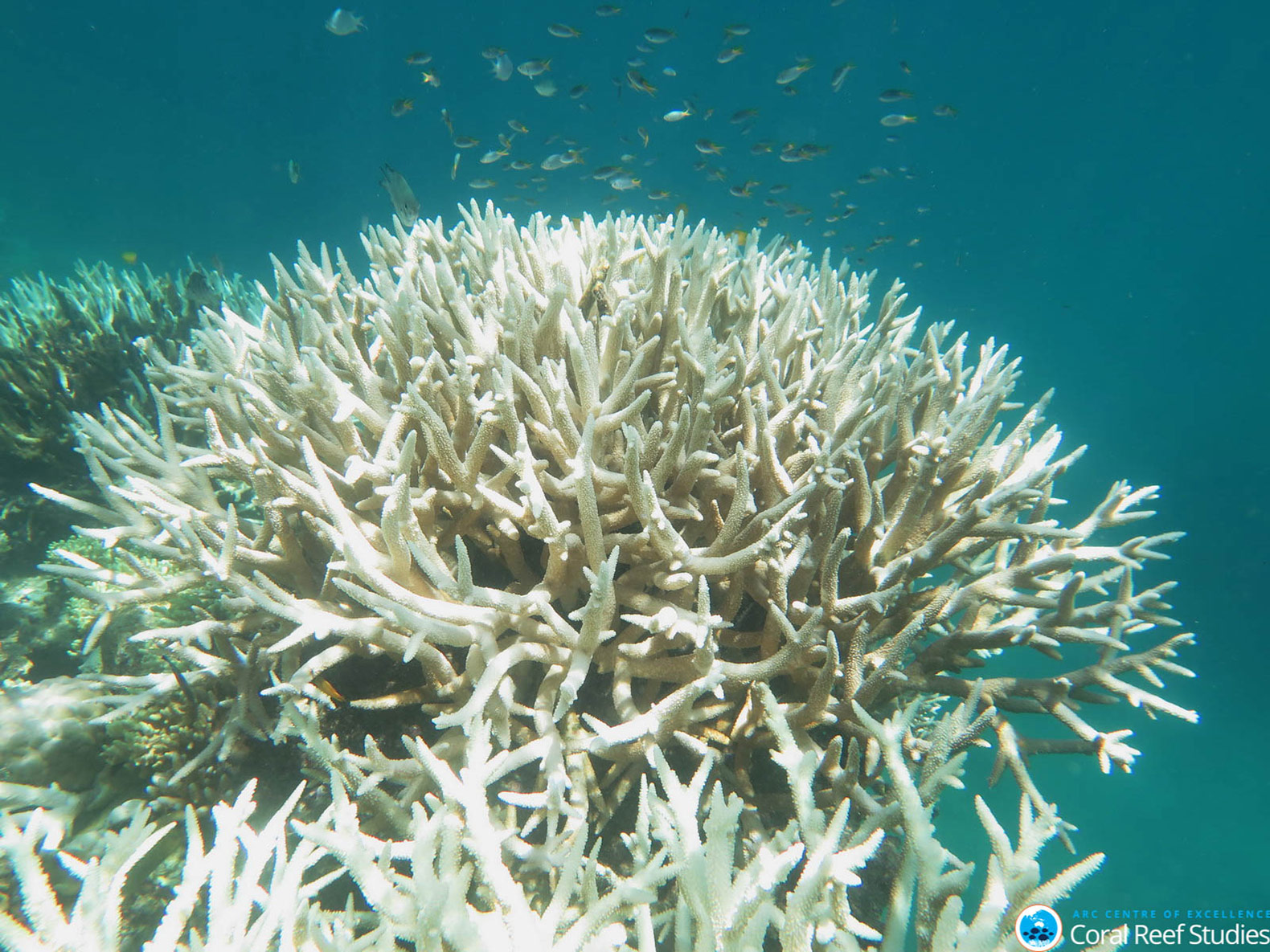 Rising Ocean Temperatures Are Cooking The Great Barrier Reef To Death
