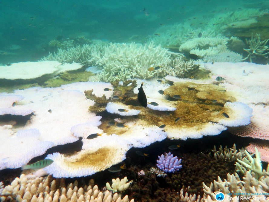 ARC Centre of Excellence for Coral Reef Studies, Australia, Great Barrier Reef, coral, coral reef, coral reefs, coral bleaching, bleached coral, mass bleaching, mass bleaching event, global warming, climate change, environment, environmental destruction