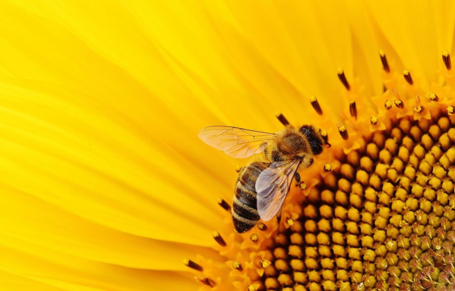 neonicotinoids, bee deaths, bee killing pesticides, pesticide exposure, water pollution, water contamination, drinking water, pesticides in drinking water, neonicotinoids in drinking water, iowa, us geological survey, university of iowa, wastewater treatment
