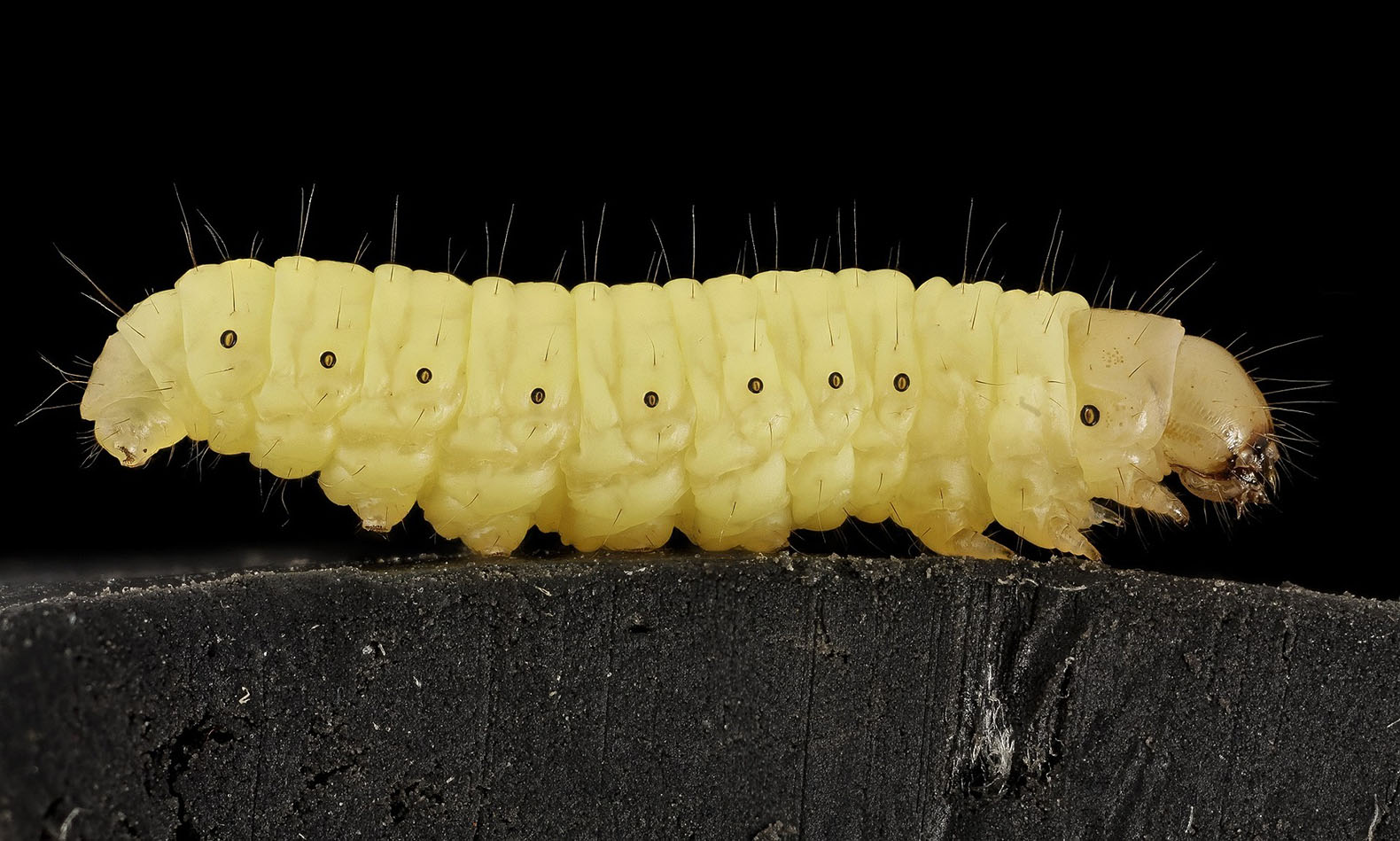 Plastic-eating caterpillar could revolutionize waste treatment