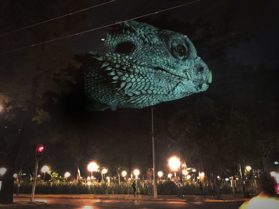 Animal Watching by Maizz Visual, animal video art, habitat destruction art, environmental awareness art, Mexico City art installation, Maizz Visual, video art by Maizz Visual, Marvin Festival 2017, Marvin Festival 2017 art,
