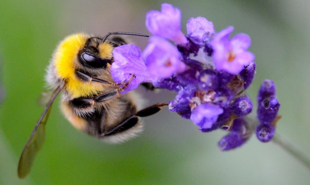 Quot Bee Friendly Quot Plants Sold In The Uk Are Coated In Harmful