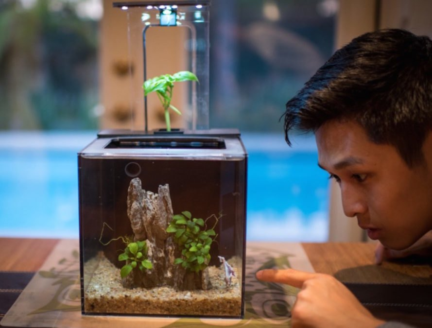 ecoQube C, aquarium, Father's Day gifts, portable ecosystem