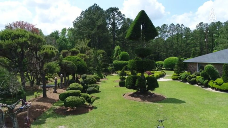 Pearl Fryar, compost pile garden, rescued plants, repurposed plants, garden design, plants, topiary gardens, topiary design, compost pile plants, south carolina topiary garden, plant foraging, Bishopville, South Carolina, Bishopville topiary garden