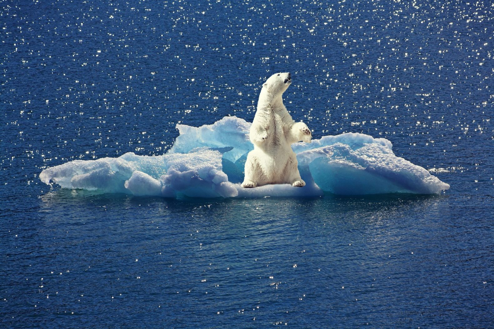 polar bear, climate change, EPA, fossil fuels, oil,