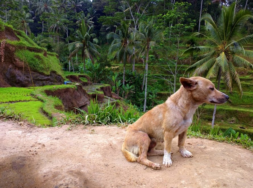Bali, Indonesia, animal, animals, dog, dogs, puppy, puppies, dog meat, dog meat trade, dog meat industry, investigation, tourist, tourists, tourism, animal cruelty