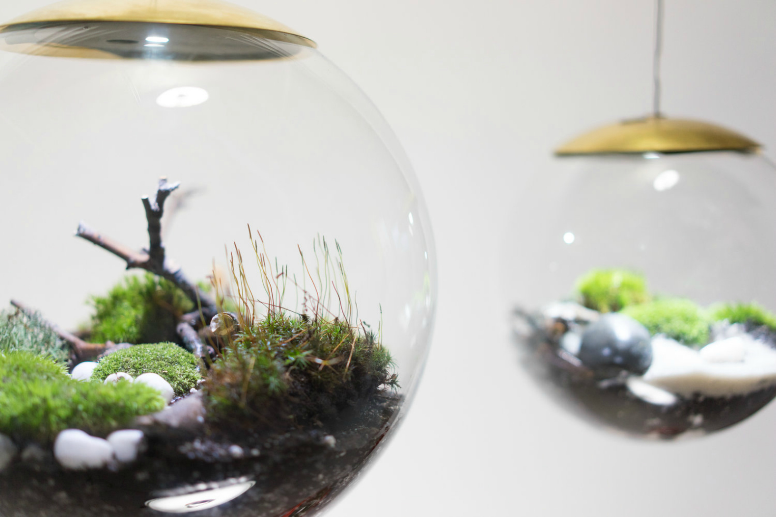 Interior Led Lights For Home These Amazing Terrarium Lamps Grow Plants In Even The