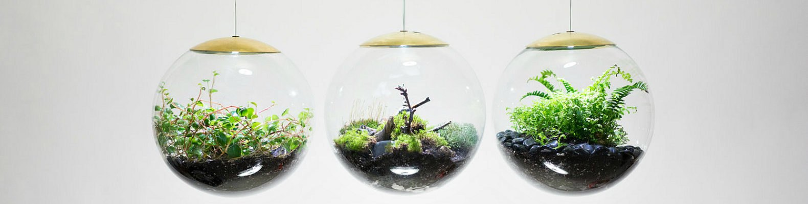 These Amazing Terrarium Lamps Grow Plants In Even The Darkest Rooms