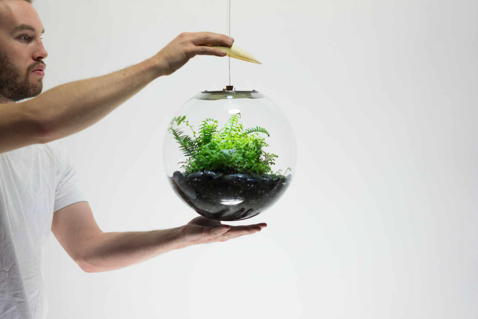 Terrarium Lamps Grow Plants