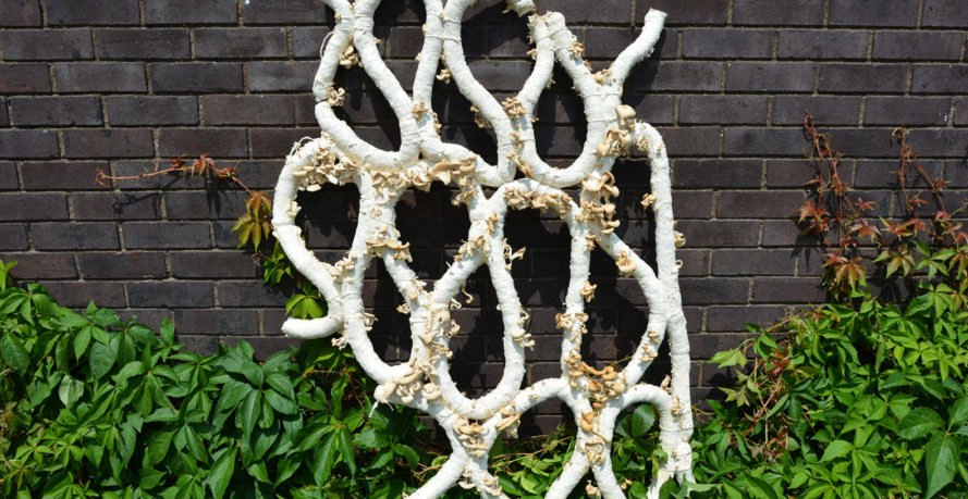 Grown Structures, Aleksi Vesaluoma, Brunel University London, Astudio, mycelium, mushrooms, green building materials, zero waste, natural building material, biomimetics, green architecture
