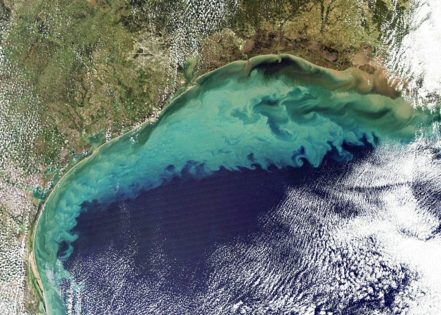 Algae bloom, Gulf of Mexico, bacteria, agrochemical, pollution, climate change, global warming, die-off,