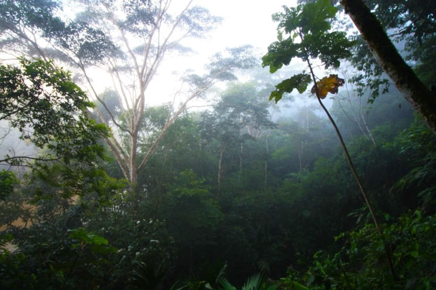 scientists discover the amazon forest sets off its own rainy season