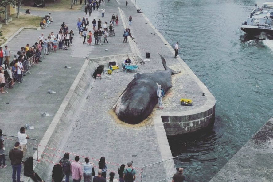 beached whale, Paris, France, art installation, Captain Boomer Collective, environment, wildlife, activism,