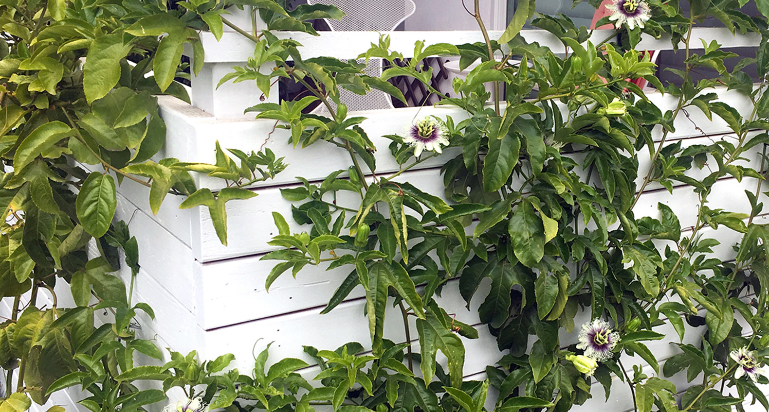 This Diy Trellis Doubles As A Lush Private Oasis With Seating