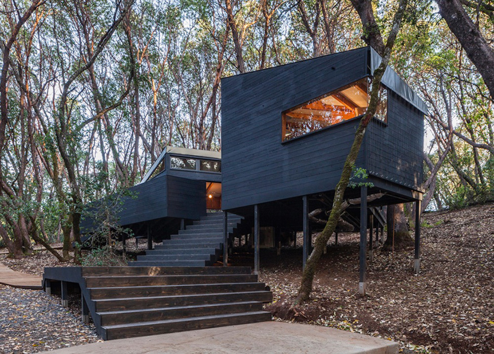 Tent Cabin Cluster Blends Perfectly Into A Californian Forest