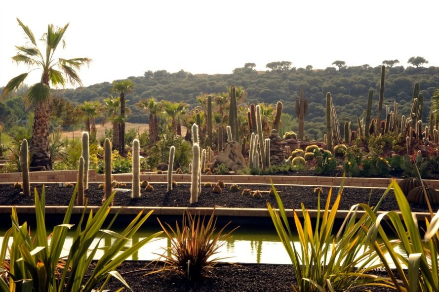 GarciaGerman Arquitectos, Madrid cactus park, desert city, desert city madrid, garden, Cacti greenhouse, Cacti park, madrid parks, madrid parks, madrid desert city, cactus gardens europe, public green space, urban gardens, spain cactus park, cactus greenhouse, park design, landscape archictecture, sustainable parks, green design, sustainable design, sustainable urban design
