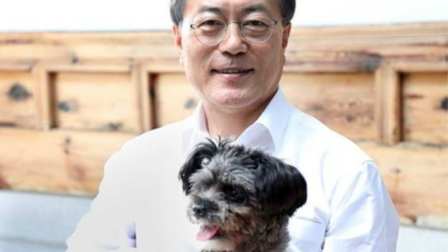 South Korea, Moon Jae-In, dog meat trade, Tory, adopt, activism,