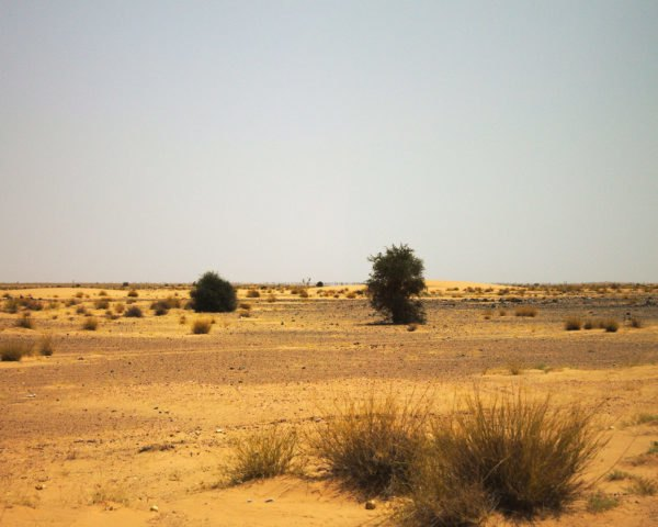 Sahel, Africa, dry, dry region, climate change, weather, environment, rain, rainfall, monsoon, Sahel monsoon, Potsdam Institute for Climate Impact Research, climate, Sahel climate