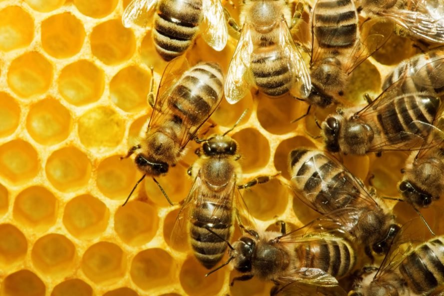 bees, honeycells, biomimicry, superorganisms