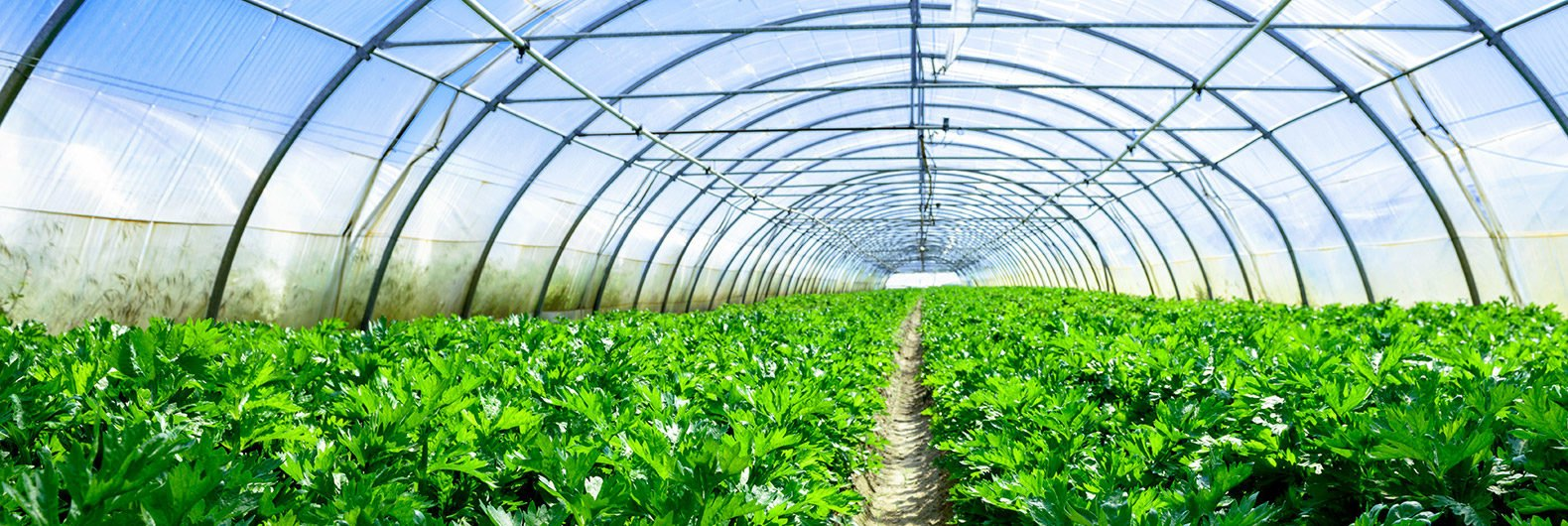 Ontario Greenhouses Could Lose $10M Because Of New Cap And Trade Rules