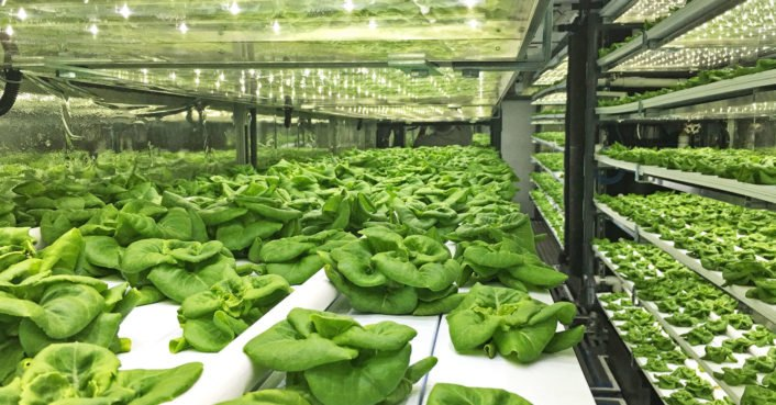 40-foot shipping container farm can grow 5 acres of food with 97% less water