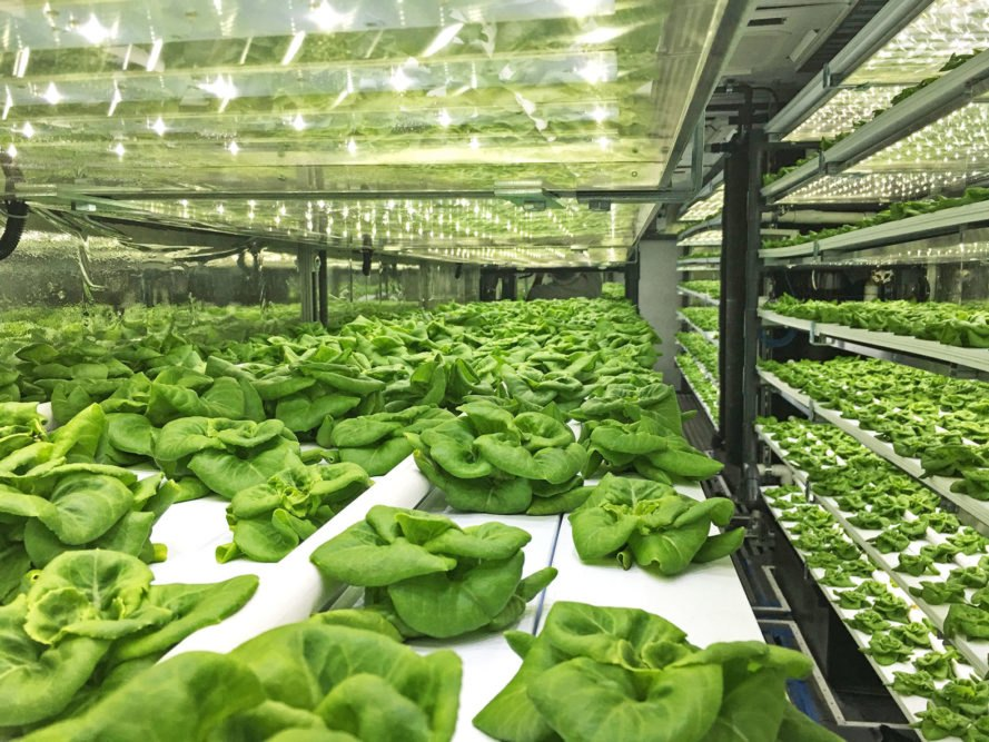 Local Roots, TerraFarm, Local Roots shipping container farms, hydroponic shipping container farms, shipping container farms food deserts, shipping container farms less water, shipping container farms more food, shipping container farms agriculture, future of agriculture