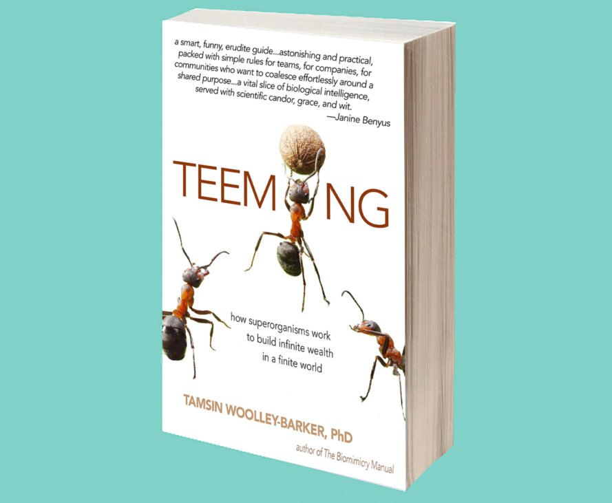 Tamsin Woolley-Barker book, Teeming by Tamsin Woolley-Barker, Teeming: How Superorganisms Work to Build Infinite Wealth in a Finite World, company, superorganisms, biomimicry in workplace, biomimicry for company improvement, biomimicry for business, interview Tamsin Woolley-Barker