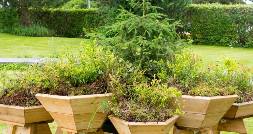 Bilberry Pad, modular planters, Mieluisa, green planters, green design, Finland, Siberian larch