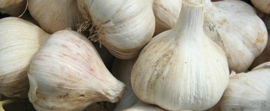 garlic, garlic bulbs, garlic cloves, raw garlic