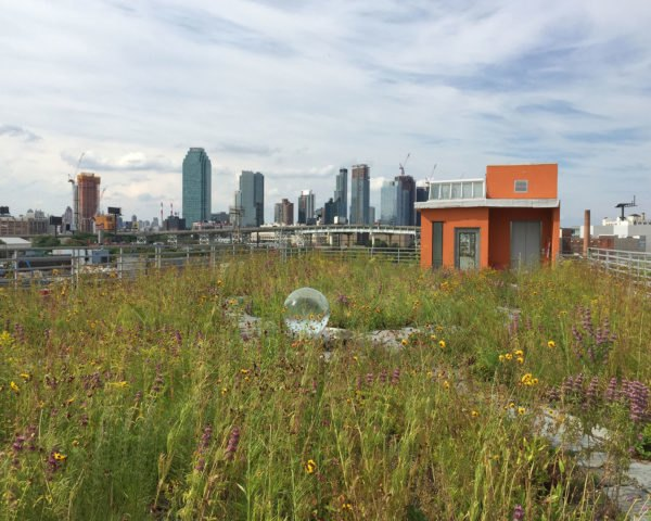 green roof design, green roof NYC, green roof Brooklyn, rooftop garden, green space, urban green space, urban garden, city garden, green NYC, Newtown Creek Wildflower Roof, Greenpoint, Brooklyn, sustainable landscaping, green roof, green design, sustainable design, green building, park, public space, urban design