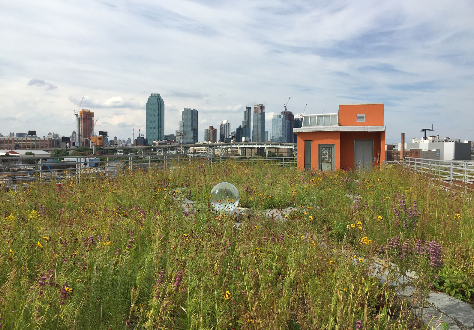 A Rooftop Urban Oasis Springs To Life In A Polluted NYC Neighborhood