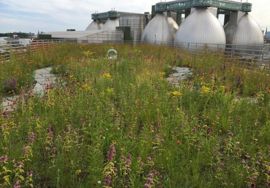Newtown Creek Wildflower Roof, Greenpoint, Brooklyn, sustainable landscaping, green roof, green design, sustainable design, green building, park, public space, urban design