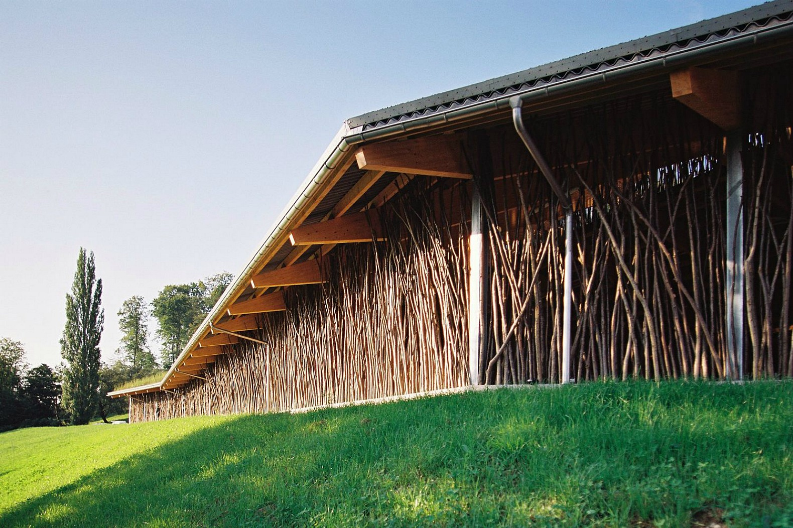 Beautiful Cow Barn In Basel Is Made Of Tree Branches