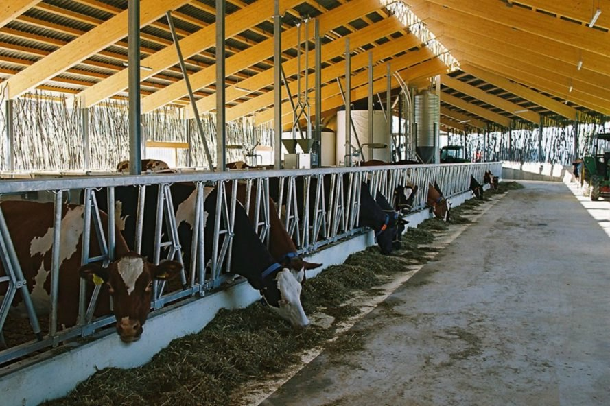 Forschungs + Architekturbüro AG, cow barn, barn design, barn renovation, stick structures, natural building materials, green building materials, sustainable building materials, cow bard design, green roof, grass-topped roof, green design, agriculture, basel barn, swiss architecture