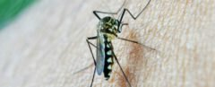 South East Asia, Thailand, Monsoon, mosquito, malaria, super malaria, parasite, health, poverty,