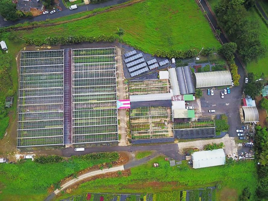 Cali Nurseries, Hector Santiago, Puerto Rico, Hurricane Maria, nursery, flower, flowers, poinsettia, poinsettias, greenhouse, greenhouses, solar, solar power, solar energy, solar panels, energy, renewable energy