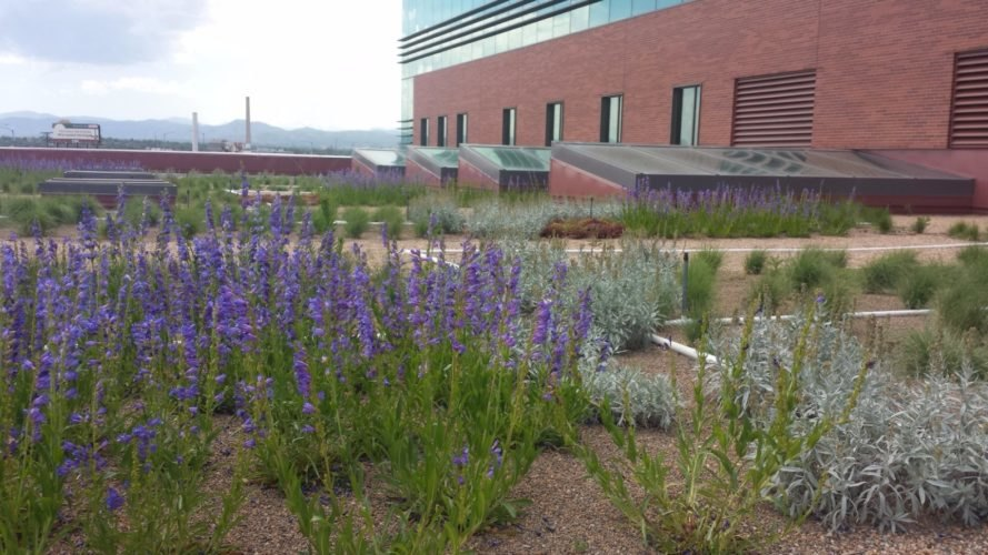 Denver, Colorado, green roofs, green roof