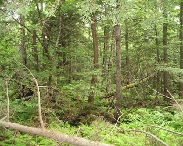 Marine Biological Laboratory, Harvard Forest, Massachusetts, forest, hardwood forest, forests, tree, trees, soil, soils, soil carbon, carbon, carbon emissions, carbon dioxide, climate change, global warming, warming, nature, environment