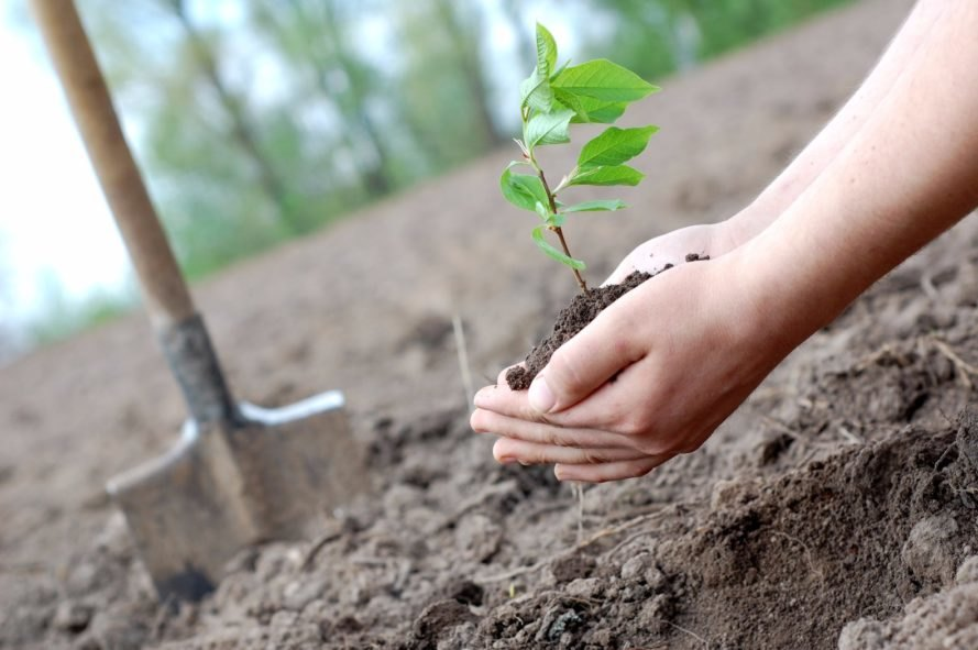 climate change, greening Earth, forests, planting trees