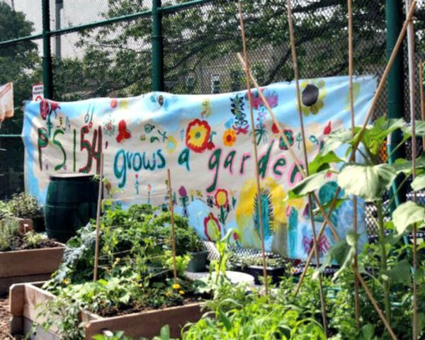 New York City, public schools, school garden, health, environment, eco kids, modern kids, sustainability, food revolution, healthy living