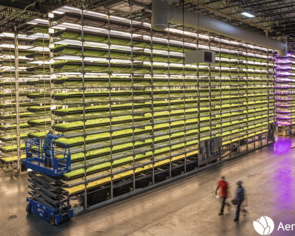 AeroFarms, AeroFarms investment, AeroFarms technology, vertical farming, aeroponics, hydroponics, vertical farming businesses, indoor farming business, modern agriculture, sustainable agriculture, sustainable farming, indoor farming, indoor agriculture, soilless agriculture, soilless farming, IKEA, IKEA indoor farming, IKEA vertical farm, IKEA indoor garden, Space10, David Chang, Momofuku Group, Momofuku Group investments