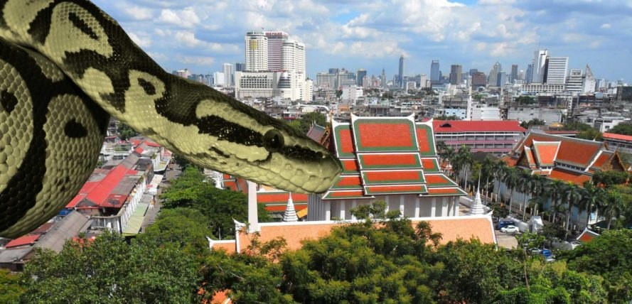 Groovy Why Thousands Of Snakes Are Invading Bangkok Homes Interior Design Ideas Inesswwsoteloinfo