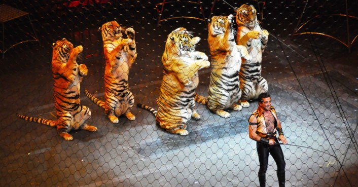 photo image Italy bans the use of animals in circuses