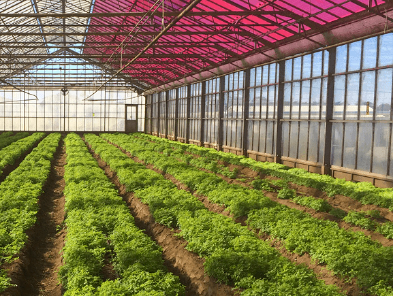 greenhouse technology Fulltext - role of greenhouse technology in agricultural engineering.